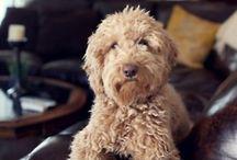 puppy love  / by Michele Miller