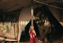 Circus Americana / by Grace Hazlett