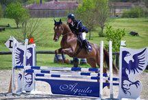 Aquila Paris : à cheval sur l'élégance ! / Concours Complet d'Equitation (CCE) à Cognac #CCE #Cognac #PrixAquila