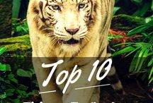 Singapore - Top 10 Travel Lists