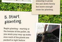 Gardening And Other Outside Ideas