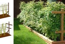 Zahrada - pěstování
