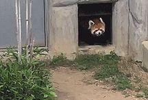 Animals GIF