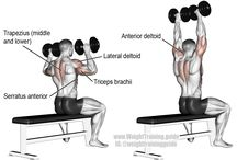 Chart de músculos...