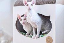 Domek dla kotów
