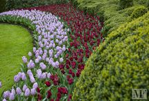 The Keukenhof's gardens - Holland