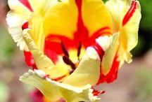Piha/ our garden