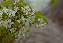 весна / the spring / весна во всех проявлениях