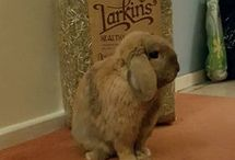 Larkins Hay Competition Pics!