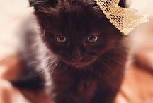 [ Black Cats ]