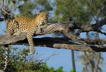 Nature - African Wildlife