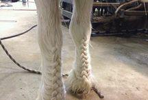 Pony haarstyles
