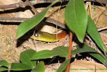 Hong Kong Snake Wallpapers / These are the snakes that we have encountered on the hiking trails of Hong Kong.