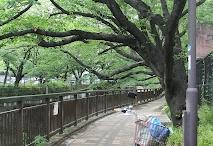 Tokyo, riding  Bike