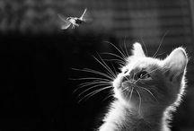 Cats / by Miguel Angel Barragán Monroy