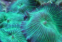 Hlubiny oceánu