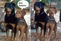 Perros graviosos