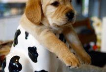 Puppy Antics