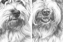 Animal drawings  / Drawings of animals