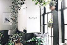 Decoración y plantas