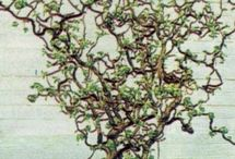 Tree branch examples / Can we do a combo of both branches? Mixing Hazel, that twisty feel with something more straight for structure and hanging...