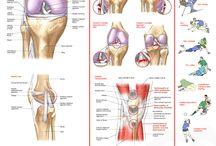 anatomische Infos zu Beschwerden