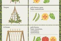 vine plant farming