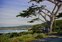Nature at its Best / Carmel and California Wine Country is stunningly beautiful. Here are some of our favorite views of Carmel.