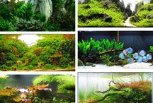 Scaping / Scaping: aquaria, vivaria, paludaria, orchidaria, wall gardens, hydroponics   Create indoor nature, with a pinch of outdoor inspiration   Style, setting  Plant selection Driftwood\Stone\Plant composition  Colors, shapes, proportions Animals, insects  Case examples Focus areas Instructables Ideas Inspirations Spectacular captures