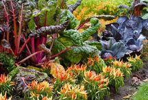 vegetable garden to save money