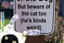 lyra animal memes