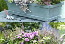 Garten und Balkonpflanzen