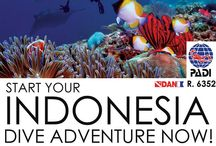 Diving Indonesia ( www.diving.or.id ) / W.A.T.E.R.W.O.R.L.D Dive Centre  your one stop  adventure partner Indonesia   http://twitter.com/#!/ScubadivingIndo  http://instagram.com/divingindonesia/  https://plus.google.com/u/0/+ScubaDivingIndonesia/posts  http://diveindonesia.blogspot.com/