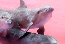 Dolphin / Delfini | Delfines  Save  / by V A D O V