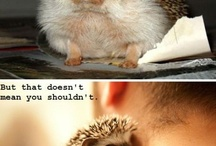 So Fluffy I Could DIE / Corgis and hedgepigs and squishy furry critters, OH MY.