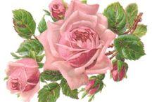 Картинки-Розы4