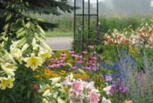 """Landscaping Ideas and Inspiration / Landscaping ideas from our own members on allthingsplants.com These are not professionals, not """"touched"""" for magazines, and not staged. Real gardens from real gardeners. Check it out for ideas in your own gardens!"""