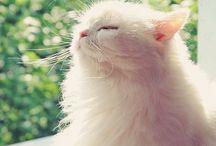 Katze & ...