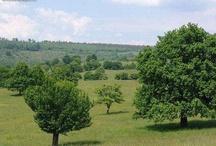 Romanian grasslands / Grasslands located up to 1400 m altitude