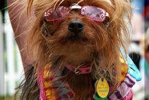 Hippy dog