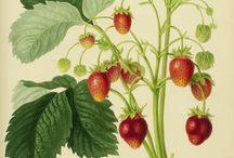 láminas de botanica
