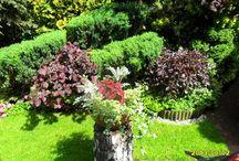 Roslinki ozdobne z lisci! / ogrodek zyskuje gdy jest obsadzony roznymi roślinkami które maja ozdobne liscie.