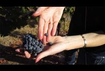 Thorn Hill Videos / All About Thorn Hill Vineyards!!!