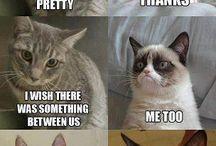 Grumpy cat >:-(