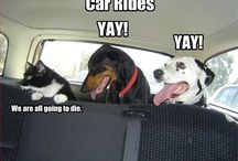 Makes me Laugh / by Leah Limer