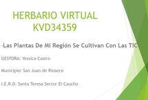 Herbario Virtual 34359 / Las Plantas de mi region se cultivan con las TIC