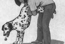 erste Hilfe Hund