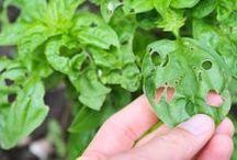 ev yapımı bitki bitlerini yok eden ilac