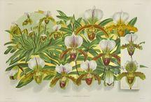 Botanicals / Frutas, flores, plantas