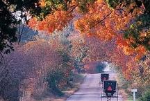 Fall... Love Fall